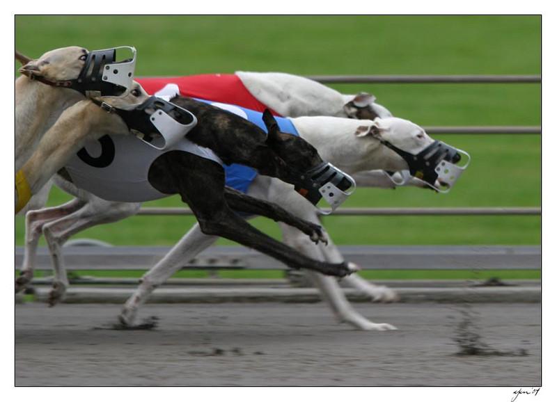 racing 05-29-04 10