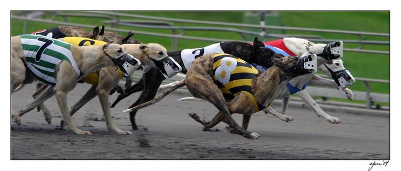 racing 05-29-04 12