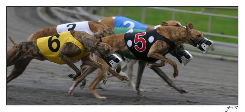 racing 05-29-04 05