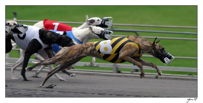 racing 05-29-04 11