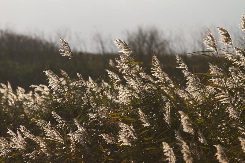 Sunlight Shining Through Water Reeds