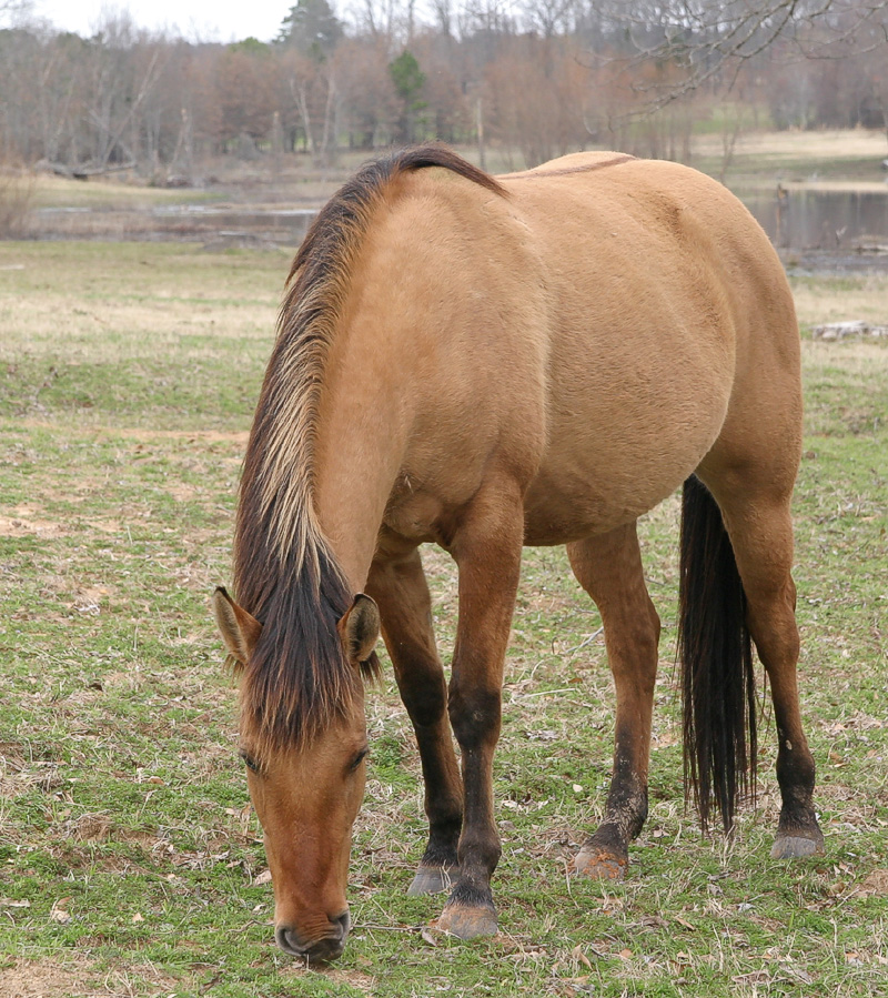 Taken with my Tamron 28-75 f/2.8 Lens. Just another one of the many Mares here on the Ranch.