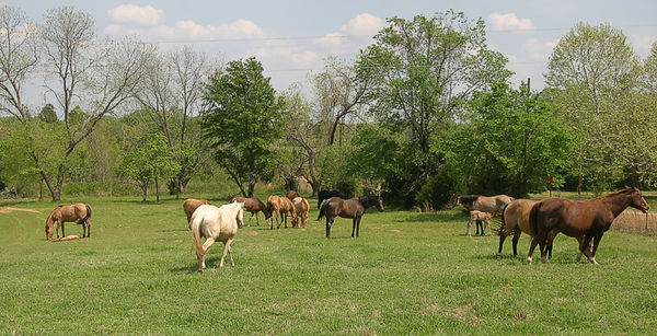 Taken with my Tamron 28-75 f/2.8 Lens. Aw one Baby is layin down takin a rest. This is just part of the Herd of Mares.