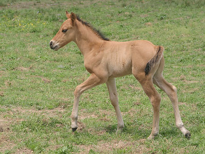 Taken with my Tamron 28-75 f/2.8 Lens. And another new Foal. I counted 20 more new ones yesterday.