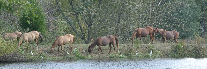 Taken with my Bigma Lens, Just more Horses here at my Pond here at the House.
