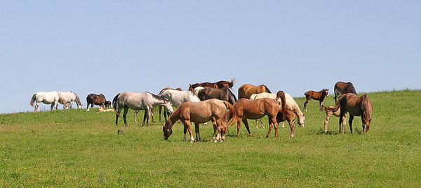 Just a few of the many Mares on the Ranch here where I live.