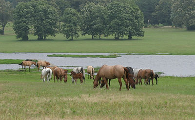 Taken with my 50mm f/1.4 Lens. This is just a few of the many Mares on the Ranch here.