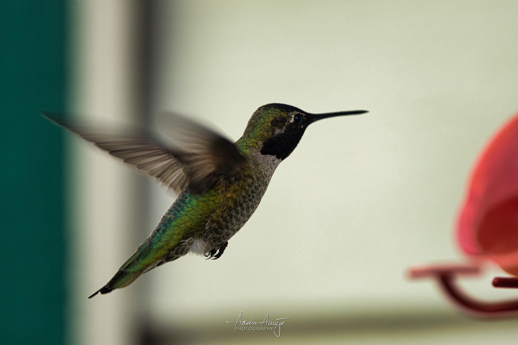 Hummingbird in flight with the Nikkor 300mm f/4E PF ED VR
