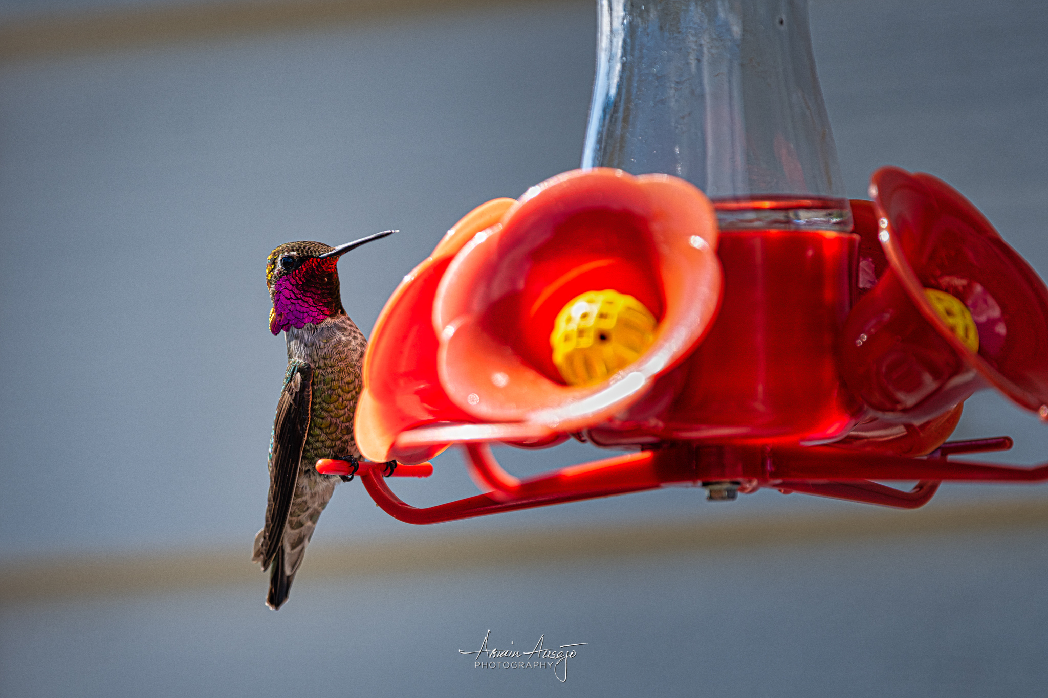 Hummingbird with the Nikkor 300mm f/4E PF ED VR