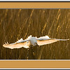 merritt island bird shoot