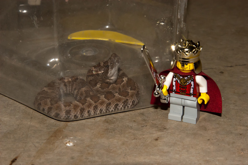 For a sense of scale, I used one of Rithik's minifig LEGO knights to pose for a photo with Ratty.  The knight kept complaining about the limits of his contract, or some such nonsense...
