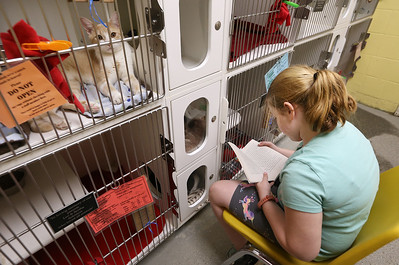 Kids from the Greater Lowell YMCA read to pets up for adoption at the Lowell Humane Society, as part of the YMCA's summer reading program. Mackenzie Holmes, 8, of Lowell, reads to cats including one-year-old Byno, top left. (SUN/Julia Malakie)