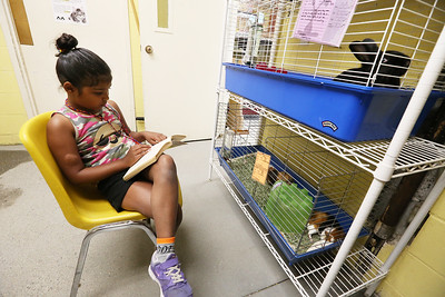 "Kids from the Greater Lowell YMCA read to pets up for adoption at the Lowell Humane Society, as part of the YMCA's summer reading program. Angelina Mohammed, 8, of Billerica, reads ""Ramona Quimby, Age 8"" to a rabbit named Moonshine. (SUN/Julia Malakie)"