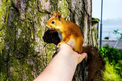 I love nuts! - Rakastan pähkinöitä VII
