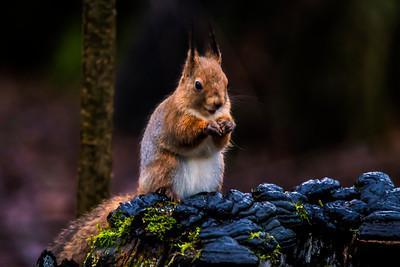 I love nuts! - Rakastan pähkinöitä!