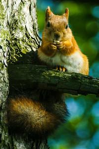 I love nuts! - Rakastan pähkinöitä I