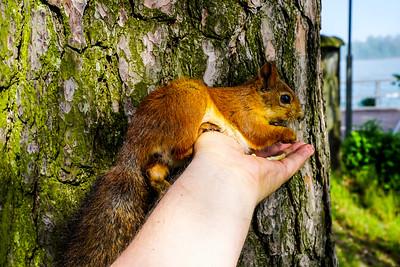 I love nuts! - Rakastan pähkinöitä IX