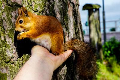 I love nuts! - Rakastan pähkinöitä VI