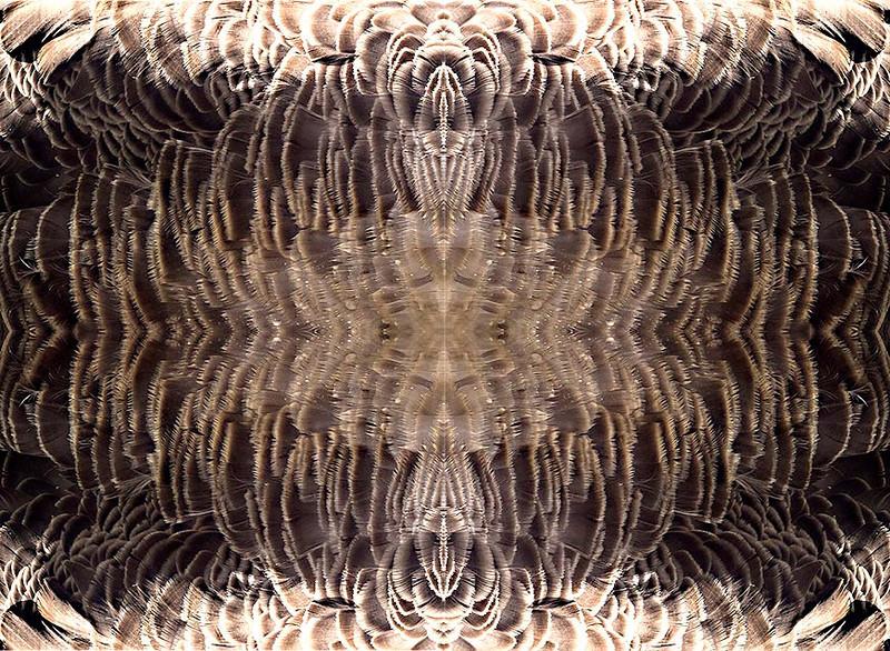 Quaruple Goose 56x45 Birch