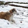 15-02 Rom Snow