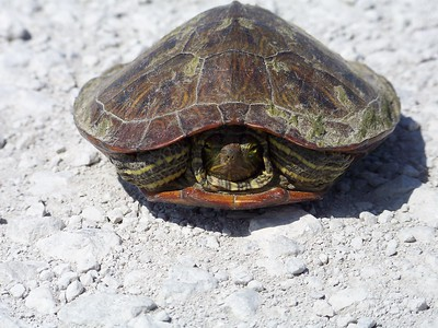 Reptiles-1-1