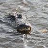 Some teeth. Everglades National Park