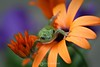 Tree frog in flowers