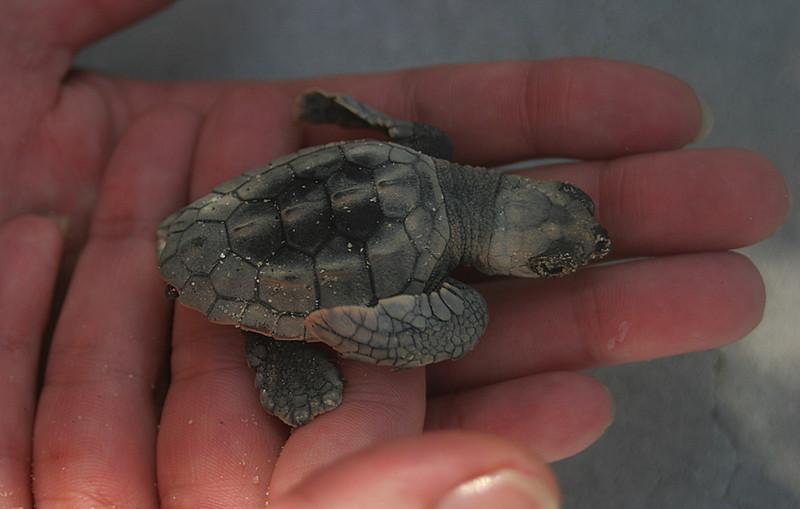 Sea turtle<br /> Biscayne Bay National Park, Florida, USA