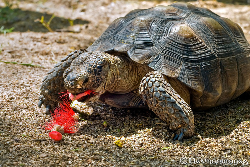Snacktime for Oogway