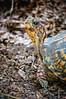 DSC_1625 Turtle front