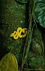 Deep In The Jungle-Eyelash Viper