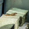 _2019-06-17_ 1000a 300 iso640 eyesees Lizard_27_photographic
