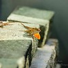 _2019-06-17_ 1000a 300 iso640 eyesees Lizard_photographic