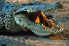 Reptiles : 7 galleries with 151 photos