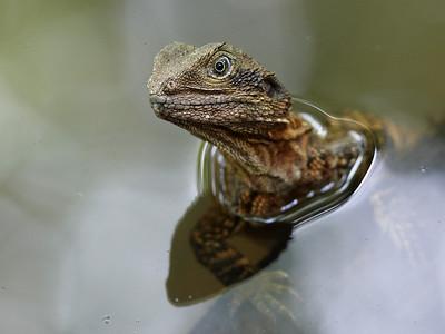 Reptiles, Amphibians
