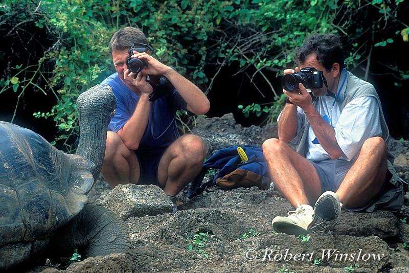 MR, Two Men Photographing Galapagos Tortoise, Darwin Research Station, Santa Cruz, Island, Galapagos Islands, Ecuador