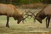 Elk<br /> Rock mountain national park