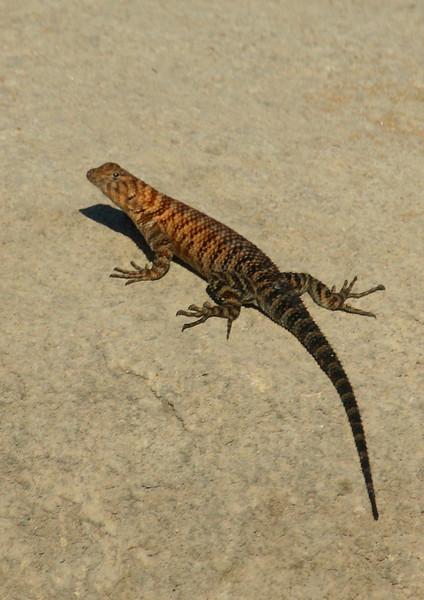 Granite Lizard