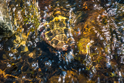 Turtle Patterns in the Waters