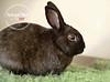Thumper8