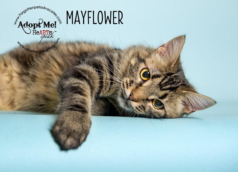 Mayflower4