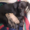 Maggie with her pups way back when.......
