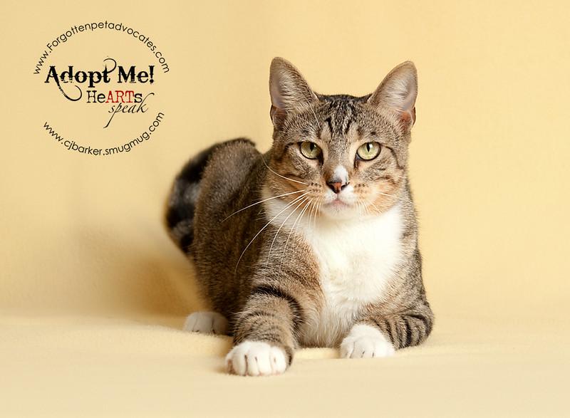 Trooper-cat11