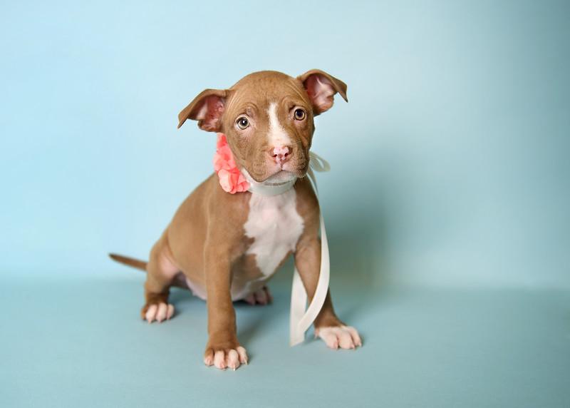 Samantha-puppy2