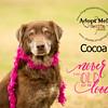 Cocoa4b