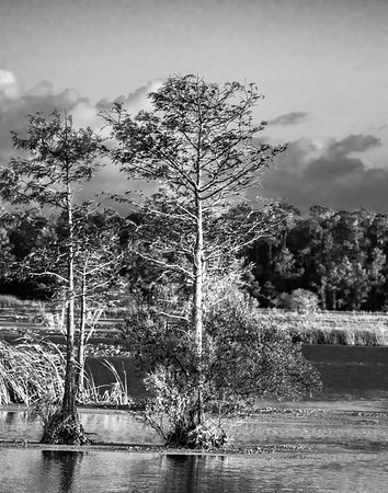 Return to the Orlando Wetlands