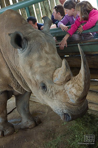 Kids Patting the White Rhino