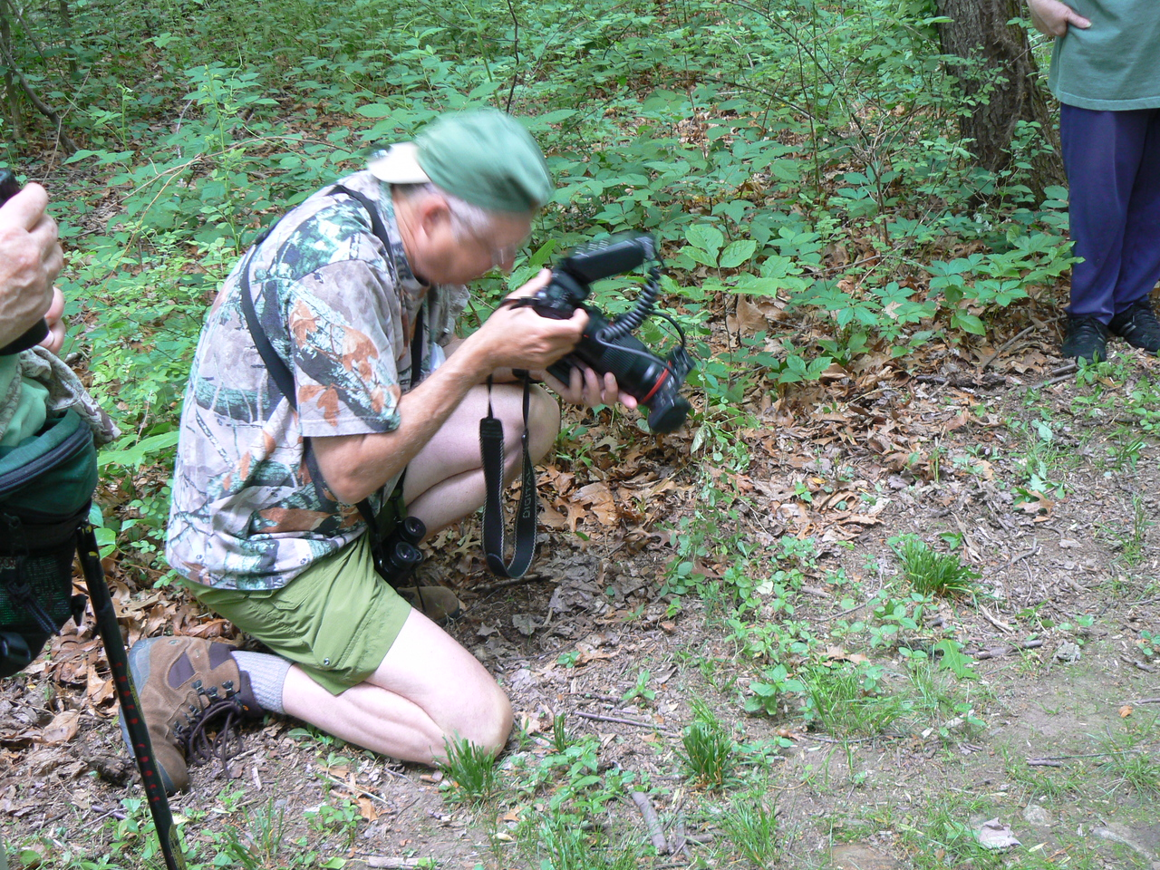Grey tree frog (in lower right) being photographed by a more dedicated photographer.