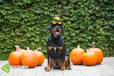 Rocky Halloween