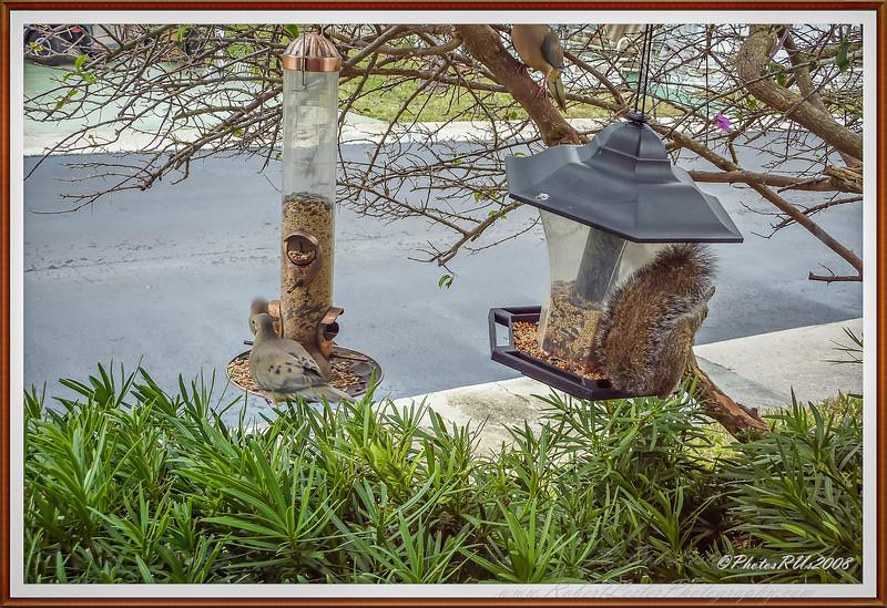squirrel   2011-2